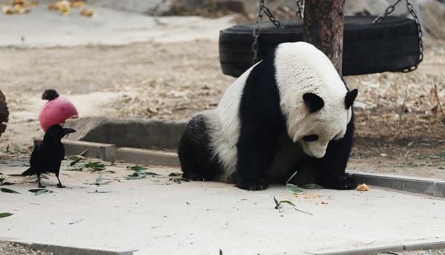 重庆动物园位于重庆市九龙坡区杨家坪,占地面积45公顷,距市中心8公里