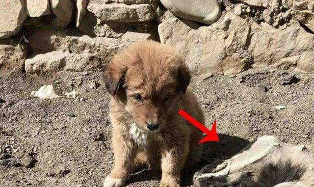 小狗狗守在母亲尸体面前,得知真相后让人感动落泪!