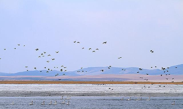 它不叫狐狸野兔,它叫胡列也吐,是个天然维养护区,拥有天鹅湖