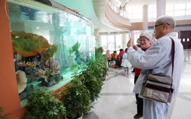 在医院里打造的非常罕见大型鱼缸,网友:有限的空间,无限的创意