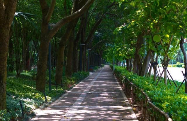 笔架山公园,东湖公园,银湖山公园,马峦山郊野公园,三洲田森林公园图片