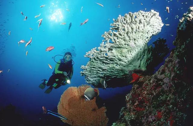 壁纸 海底 海底世界 海洋馆 水族馆 桌面 640_417