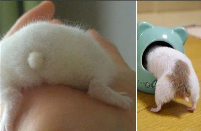 宠物篇-仓鼠2:仓鼠喜欢吃的东西都有什么