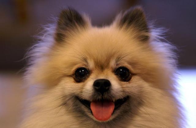 世界上公认的最可爱的四种狗狗,它们对应四个不同阶段