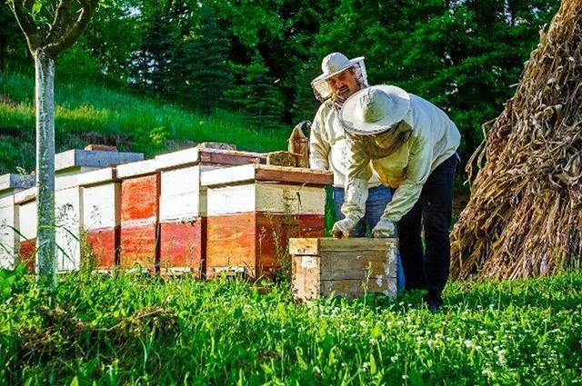 蜂蜜蜂秋末头领v蜜蜂十防如何杀死车中的蚊子图片