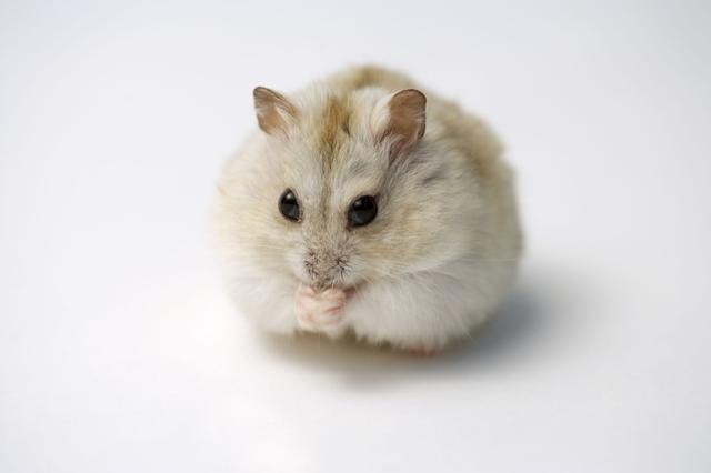 蜗牛避免的几个仓鼠,这个治疗方法生病你,告诉手足无措小速度爬行症状很慢图片