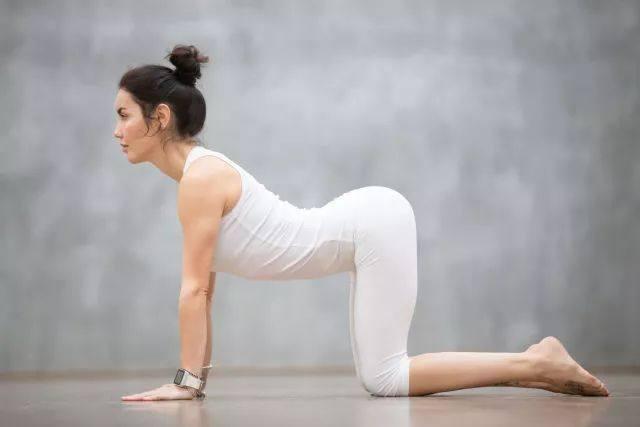 猫式瑜伽图片