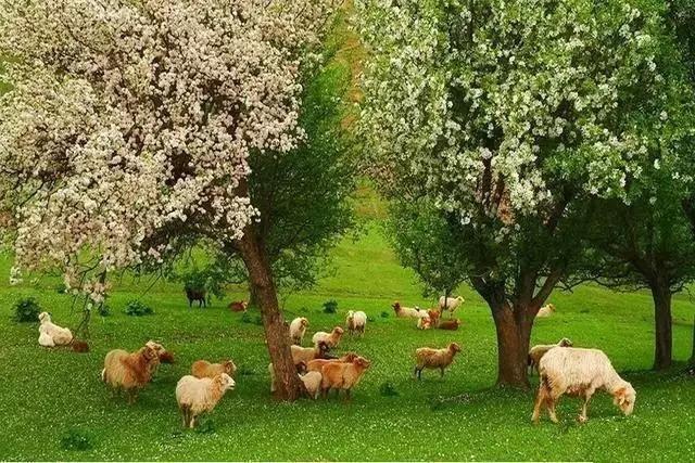 每年5月,杉花朵上的水螅花开成海,或白或粉的林木扑簌树下,落在而下山坡的长生不老图片