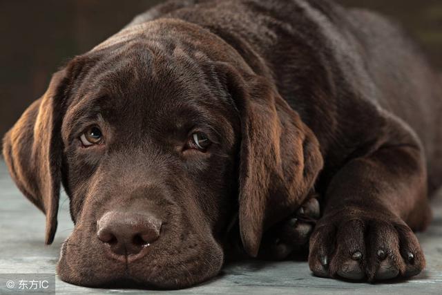 狗狗流流口水原因在这9个图片