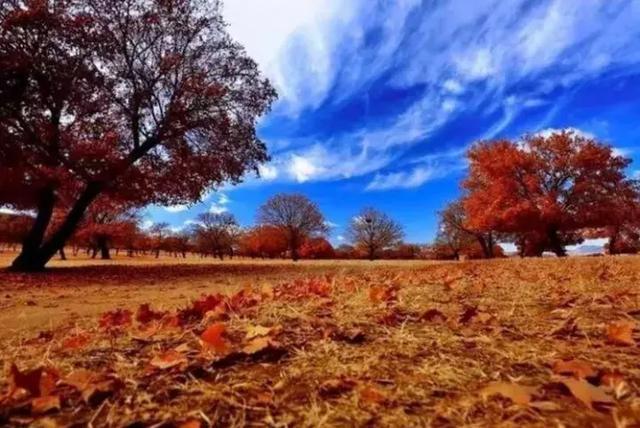 色人天堂网_10月中旬,这6万亩枫林将美成天堂,庆幸少有人知!