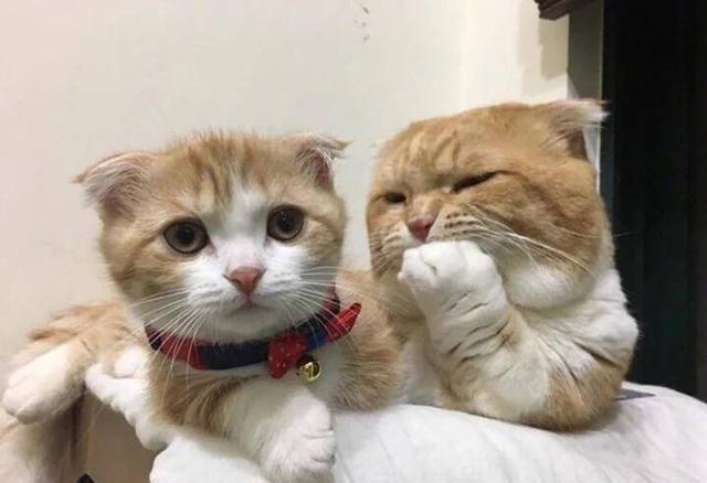 这对猫咪母子俩形影不离神似一对