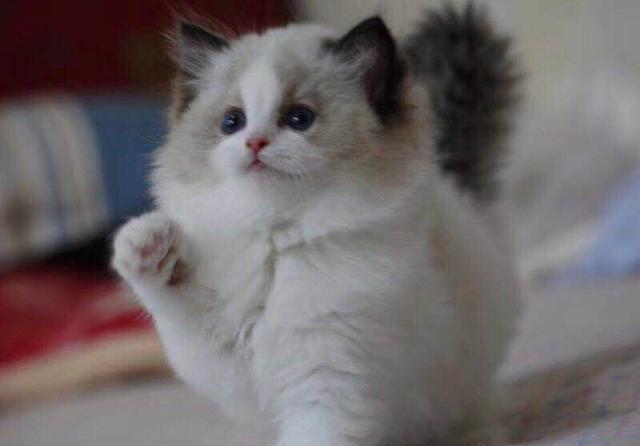 小奶猫喂养常识,不少人走进误区险些害了小奶猫