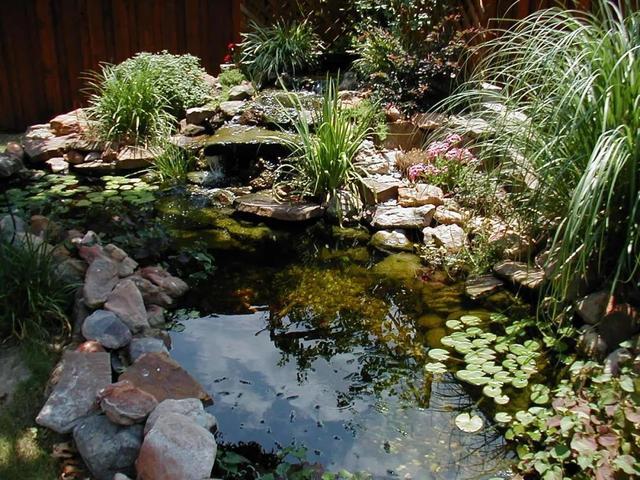 庭院水池风格设计,类型搭配详解,记得收藏图片