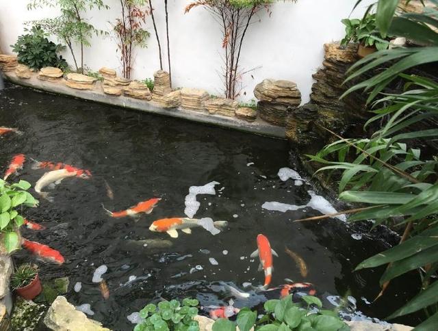 鱼池过滤系统设计图---从日本偷来的锦鲤业者内部资料图片