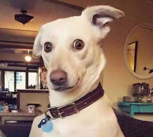 有狗狗陪伴的日子我从来不羡慕别人,搞怪的萌宠头像