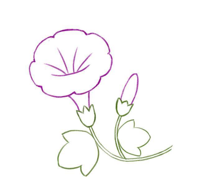 儿童简笔画 画一朵美丽的牵牛花