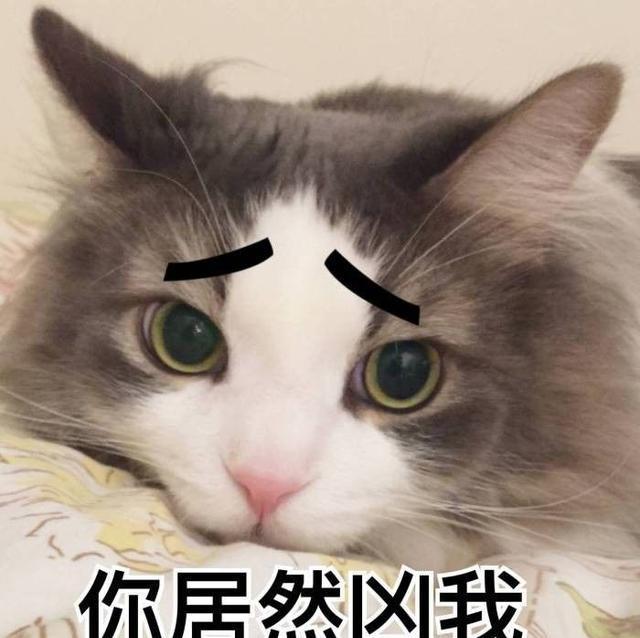 人类语言太无力,我就喜欢用猫咪表情包diss世界!图片