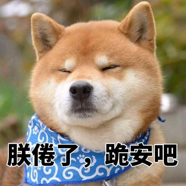 一大波柴犬表情包来袭,你的收藏夹准备好了吗?没有流量就别看了图片