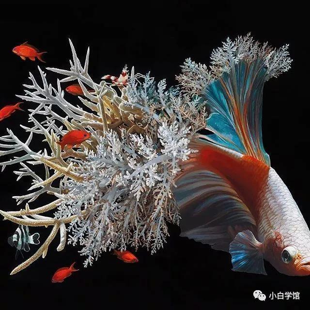 老鼠长出了翅膀,鱼有珊瑚的尾巴 她画的鱼尾巴和鳍被各种各样 美丽的