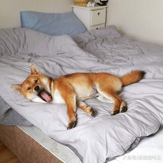 狗狗不是睡觉,或许危害疼爱,那是因为你还不知道这些学籍上床!初中取消被怎么办潜在图片