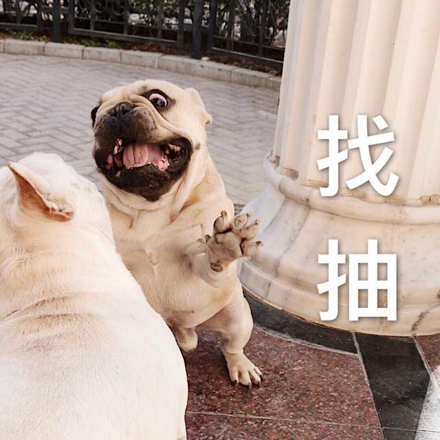 第二波狗狗搞笑表情~大胸表情图gif图