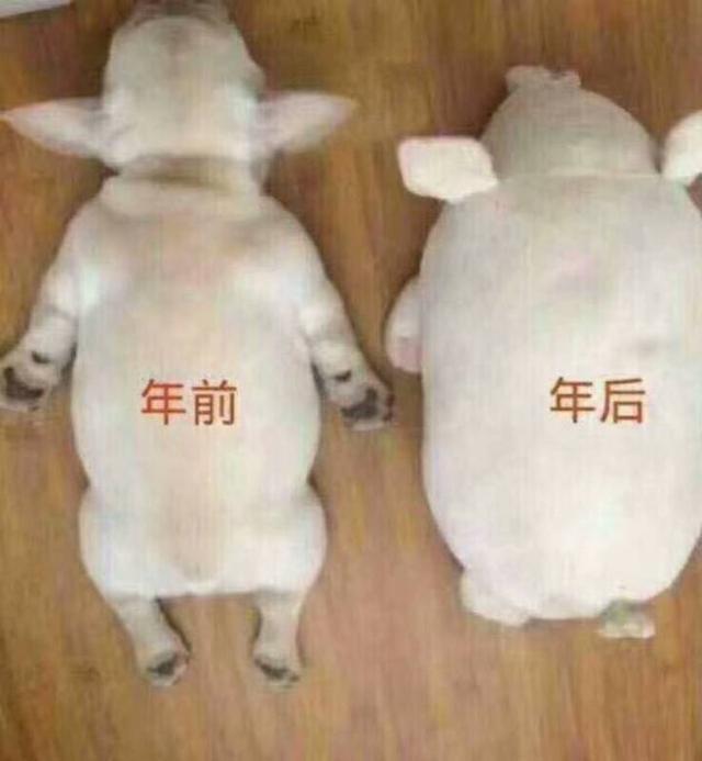 佟丽娅秀84斤体重,网友流泪晒春节前后对比照,太搞笑!