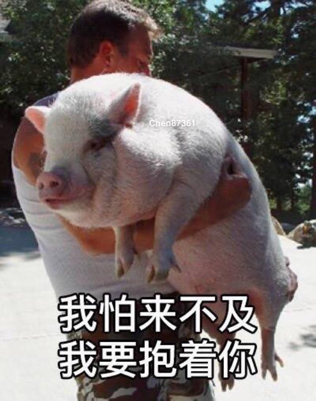 来一波萌萌哒的猪的表情包