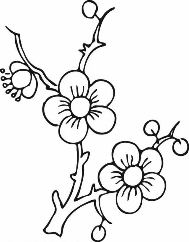 「简笔画」各种植物简笔画大全,可以直接涂色哦!(为孩子收藏)