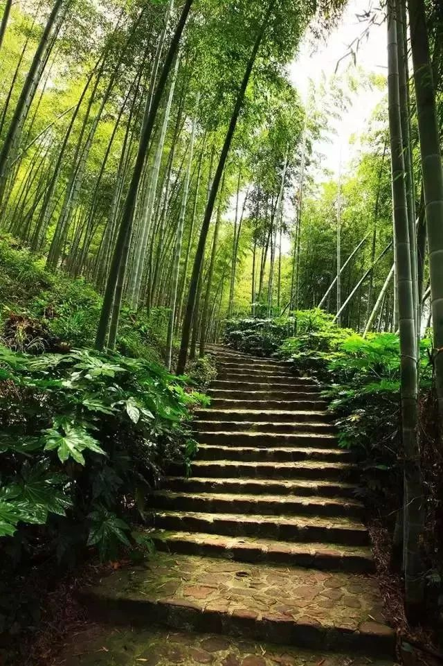 当你走进山上的小道里,周围被竹林包围着,空气里弥漫着雾气,凉飕飕的