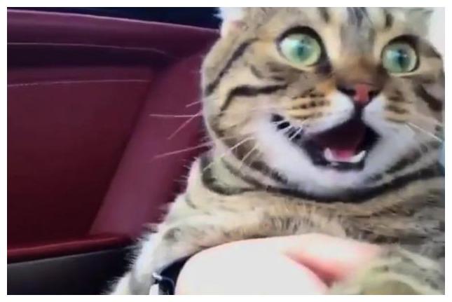 猫咪看到这画面,不服气的直起了身子:看人家猫咪多好,还有车车坐.