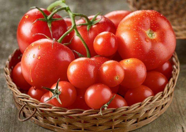 谁说温室大棚种不出高品质西红柿