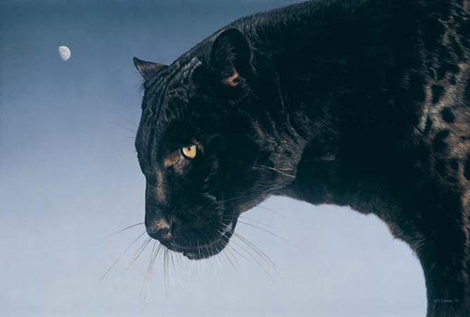 地球上最稀有的动物之一申公豹的黑豹子,你见