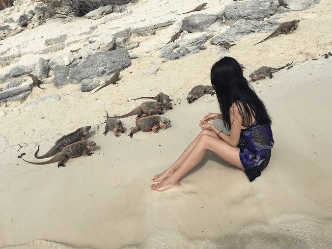来巴哈马猪岛与小猪一起游泳, 粉红沙滩拍婚纱极美!图片