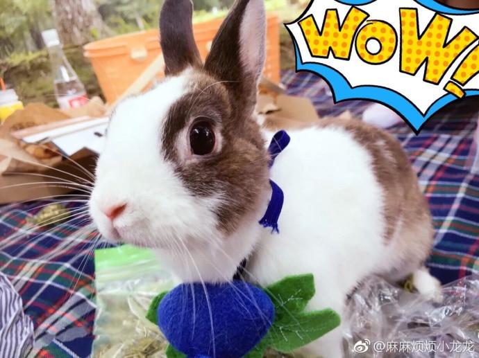"""人心的小兔子全方位满足""""兔奴""""的吸兔需求,评论里一片惊呼:""""太可爱了!"""
