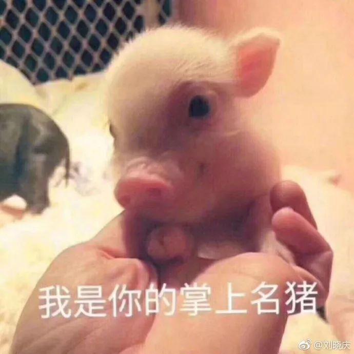 第六张图片晒了一只小猪,也是萌萌哒,或许就刘晓庆觉得可爱就晒了吧