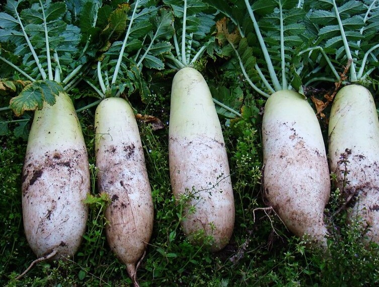 流产后什么蔬菜不能吃