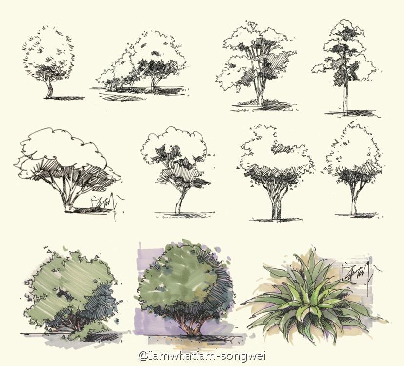 植物手绘的正确打开方式_新浪看点