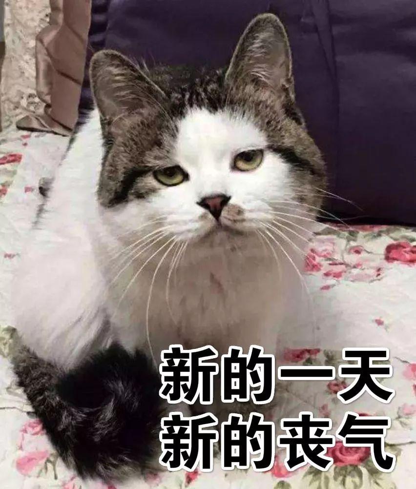 壁纸 动物 狗 狗狗 猫 猫咪 小猫 桌面 852_1002