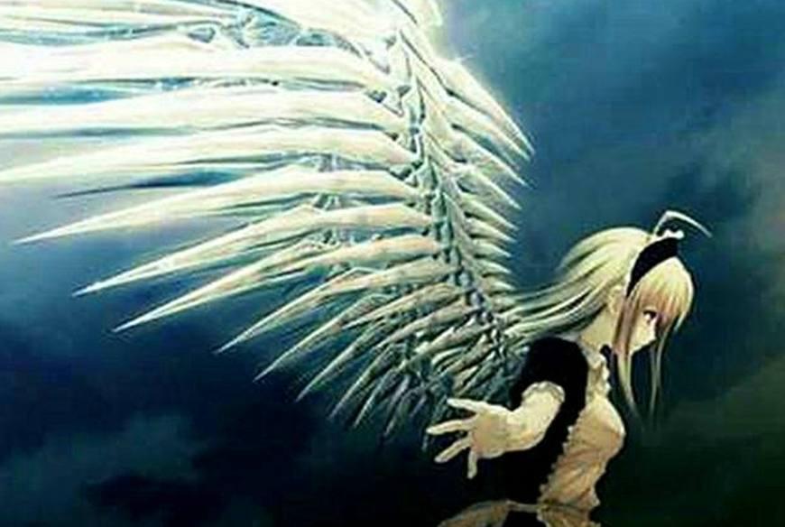 十二星座的专属翅膀,金牛座的稳重,天秤座的优雅,双鱼