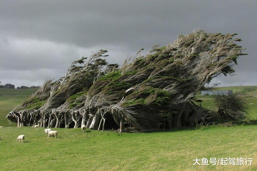 盘点世界上最美的树, 最后一棵千年树龄, 生在中国!