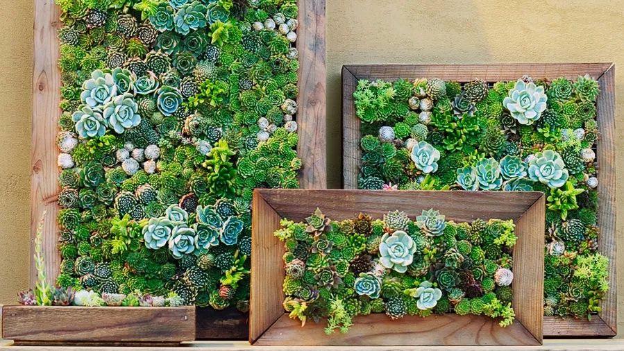 10个家庭养花创意,将花卉植物种在墙上,没有空间也能养出花园