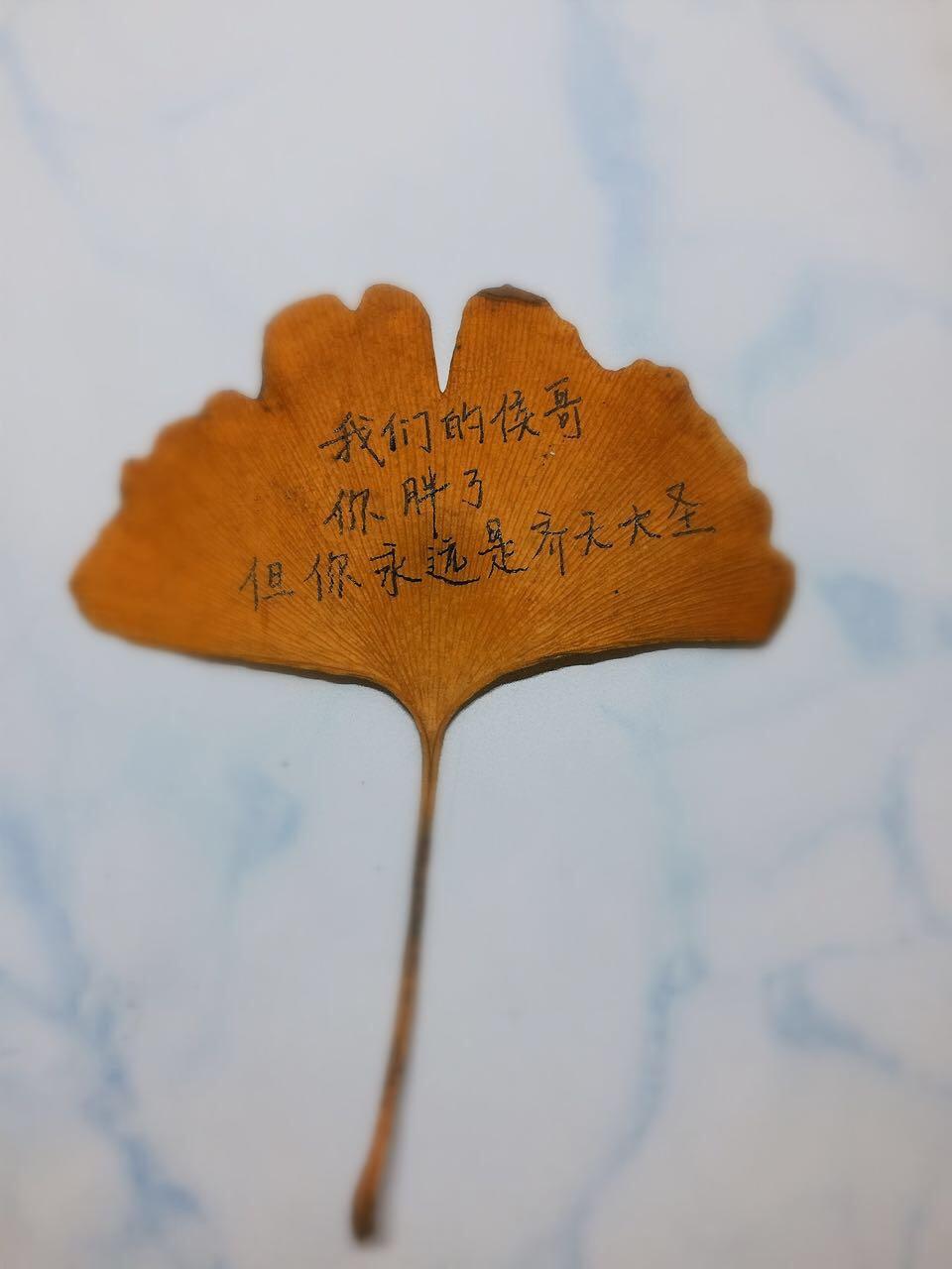 生活委员用银杏叶手写三行情书做圣诞礼物
