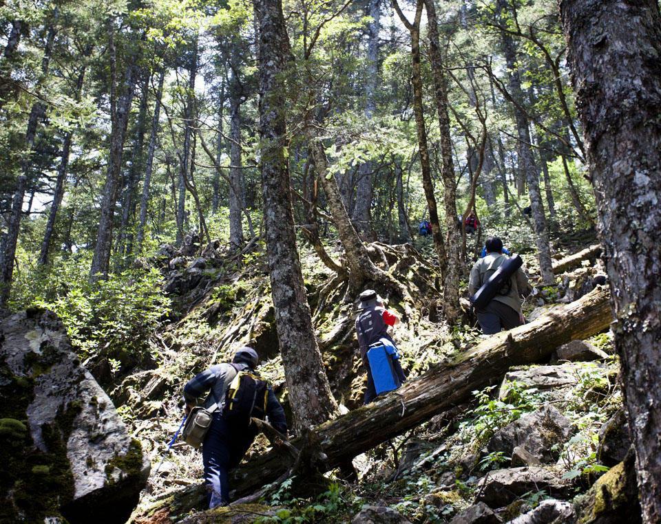 稍不留神就会成神农架野人 险峻的神农架原始森林穿越图片