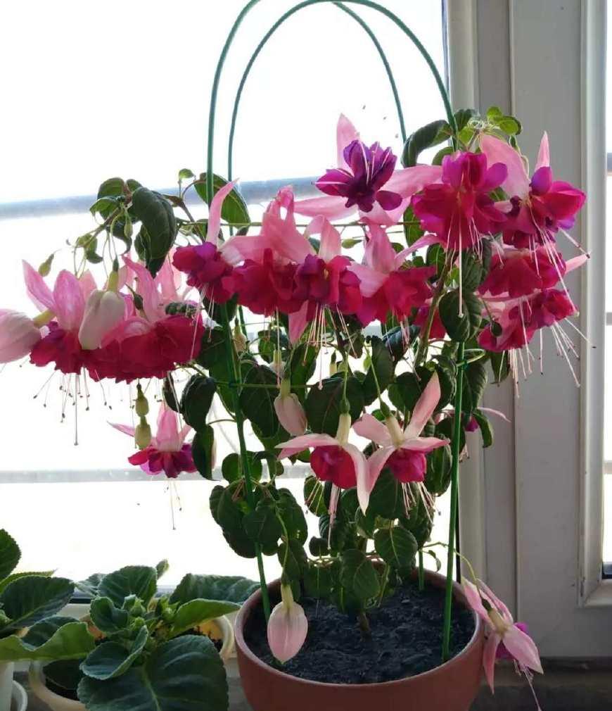 """这6种花放在阳台上,太洋气!号称""""花不落"""""""