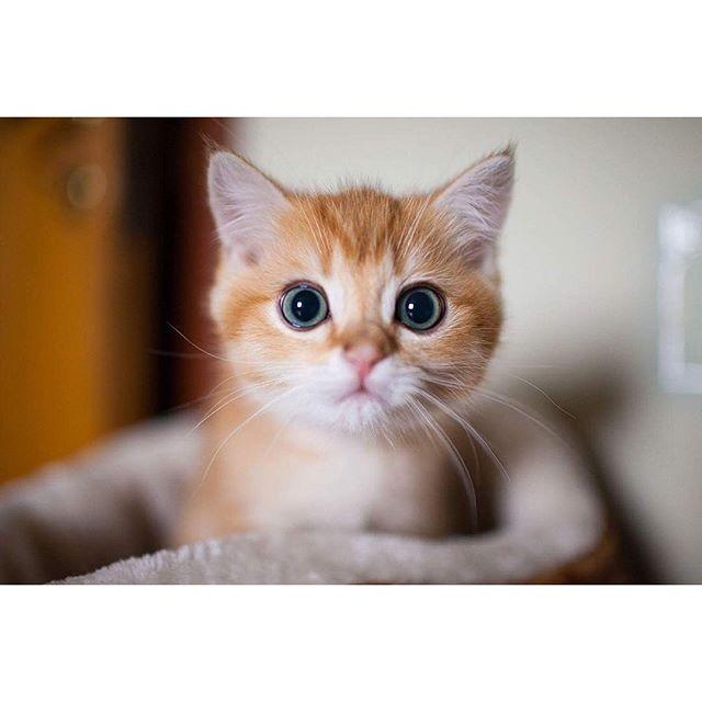 ins上一位猫奴家的小可爱们,简直萌哭了n(*≥▽≤*)n