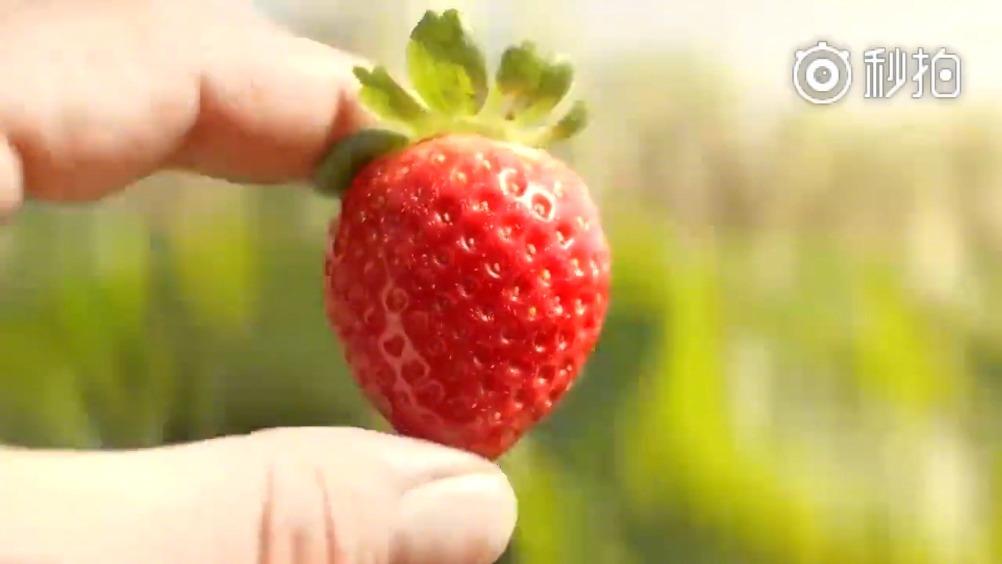 一个创意公益广告《草莓的一生》,别再轻易浪费食物了!图片
