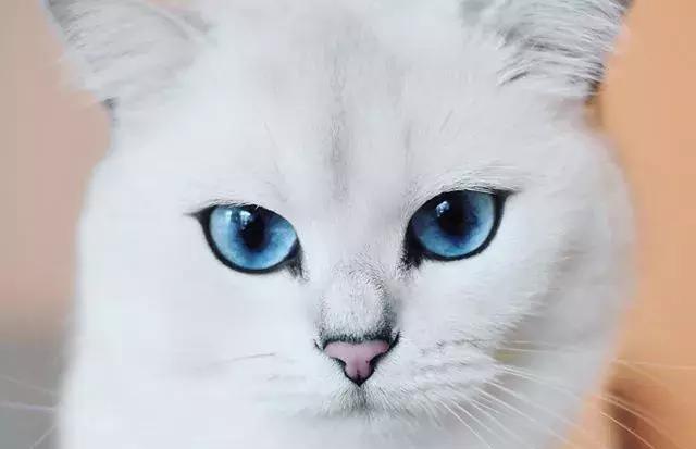 尤其是那双漂亮的大眼睛, 像海洋一样的蓝色, 让人深爱不止啊!图片