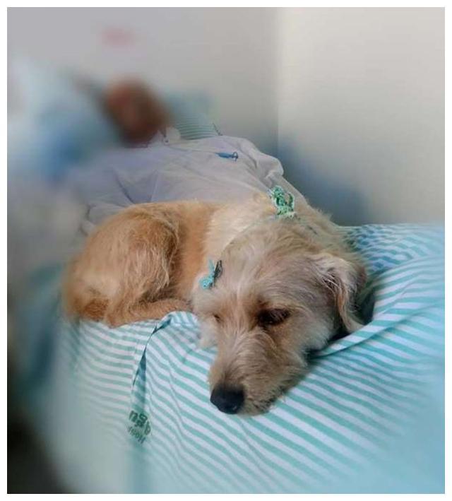 狗狗因病将脚掌咬伤,送到医院后,医生的话让人泪奔