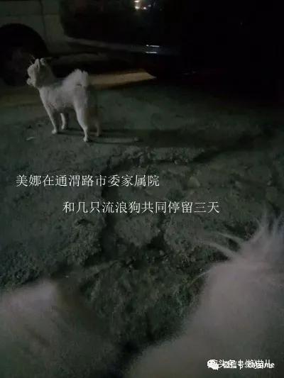 养了五年狗丢了,主的人心都碎了:重酬寻狗!!