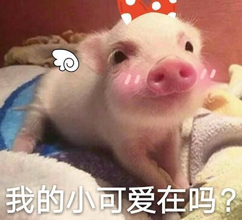 超萌小猪表情包 快来领养图片